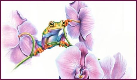 frg orchid 460X270